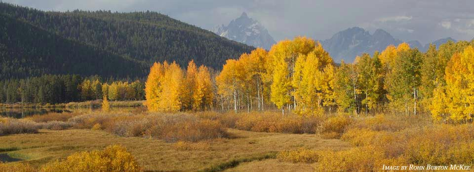 Autumn in Jackson Hole